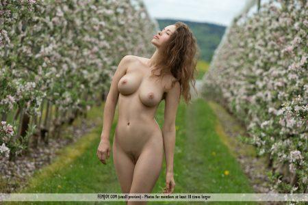bocciolo di mela Vika A. immagine 9